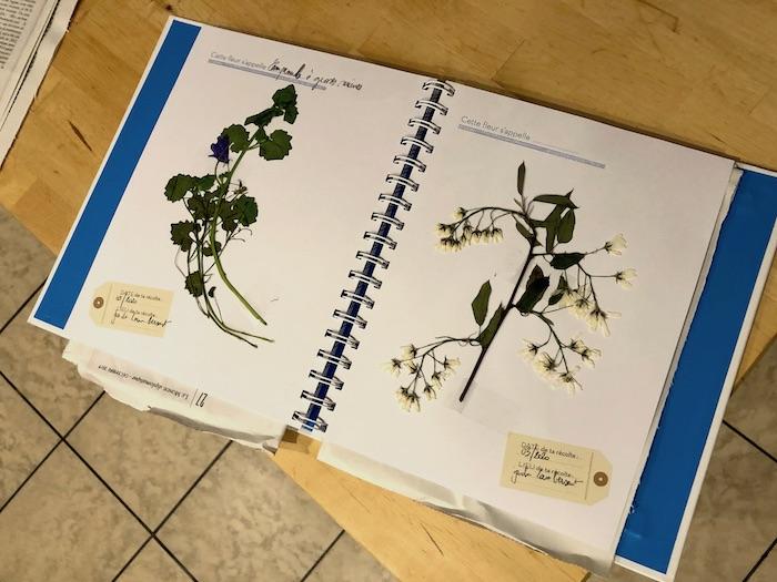 Herbier de fleurs à Lambersart