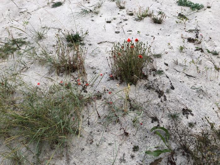 Du rouge sur la plage de Lechiagat